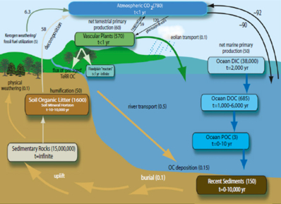 Research thomas s bianchi the global carbon cycle units are in pgc or pg cy 1 sources of inventories and fluxes are refs 2 8 48 59 61 diagram modified from drenzek 114 ccuart Images